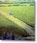 In The Rice Fields Metal Print