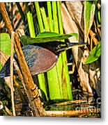 In The Shade Little Green Heron Metal Print