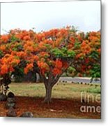 In The Shade Of The Poincianas Metal Print