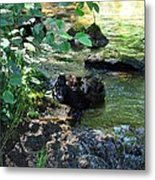 In The Shadows Of The Creek Metal Print