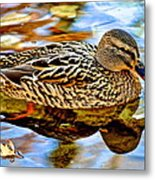 In The Shallows Metal Print