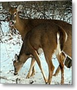 In The Snow At Sunset Metal Print