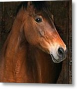 In The Stable Metal Print