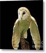 In The Still Of Night Barn Owl Metal Print by Inspired Nature Photography Fine Art Photography
