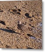 In The Stone Surf Gravel Cape May Nj Metal Print