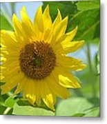 In The Sunflower Field Metal Print