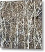 In The Sycamores Metal Print