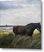 In The Tall Grass Metal Print