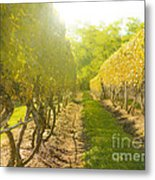 In The Vineyard Metal Print by Diane Diederich