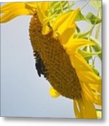 In The Wind - Sunflower Metal Print