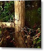 In The Woods By The River Metal Print