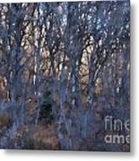 In The Woods V2 Metal Print