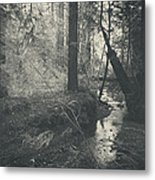 In This Silence Metal Print by Laurie Search