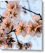 In To The Bloom. Metal Print