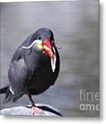 Inca Tern Eating Fish Metal Print