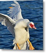 Incoming Muscovy Metal Print