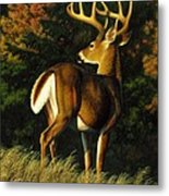Whitetail Buck - Indecision Metal Print by Crista Forest
