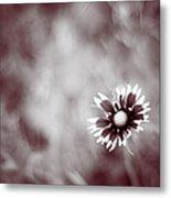 Indian Blanket Flower Metal Print
