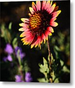 Indian Blanket Metal Print by Thomas Pettengill