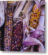 Indian Corn Harvest Metal Print