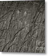 Indian Grass In The Wind Metal Print