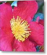 Indian Hawthorne Metal Print