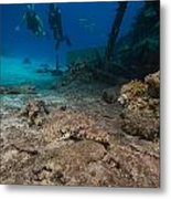 Indian Ocean Crocodilefish Papilloculiceps Longiceps In The Red Sea. Metal Print