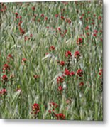 Indian Paintbrush And Foxtail Barley Metal Print