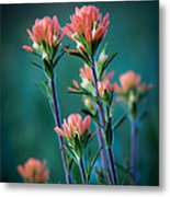 Indian Paintbrush At Dawn Metal Print by James Barber