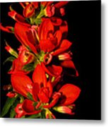 Indian Paintbrushs For Mom Metal Print
