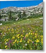 Indian Peaks Wildflower Meadow Metal Print