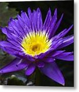 Indigo Water Lotus Metal Print