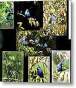 Indigos-collages 6-009 Metal Print