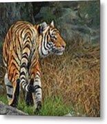 Indo-chinese Tiger Metal Print