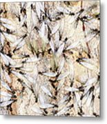 Infested Metal Print by Pam Garcia