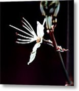 infrared Asphodel Metal Print by Stelios Kleanthous