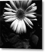 Infrared - Flower 05 Metal Print