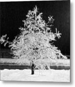 Infrared Ice Tree Metal Print