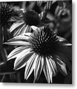 Infrared - Lucky Star Metal Print