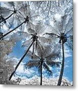 Infrared Palm Trees On The Coast Metal Print