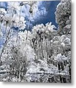 Infrared Pond And Reflections 2 Metal Print