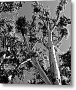 Infrared Tree Metal Print