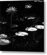 Infrared - Water Lily And Lily Pads Metal Print
