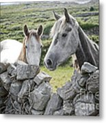 Inishmore Horses Metal Print