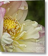 Inner Beauty Of The Lotus Metal Print