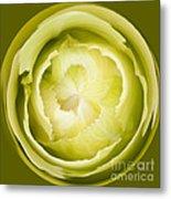 Inner Cabbage Orb Metal Print