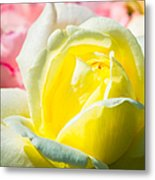 Inner Light Of Rose Metal Print