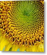 Inner Peace Forms Within This Sweet Yellow Sunflower Metal Print