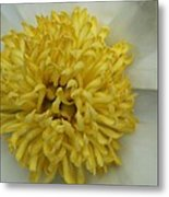 Inner Section Of A White Peony Metal Print