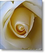 Innocence White Rose 5 Metal Print